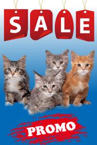 Promotii Hrana Pisici
