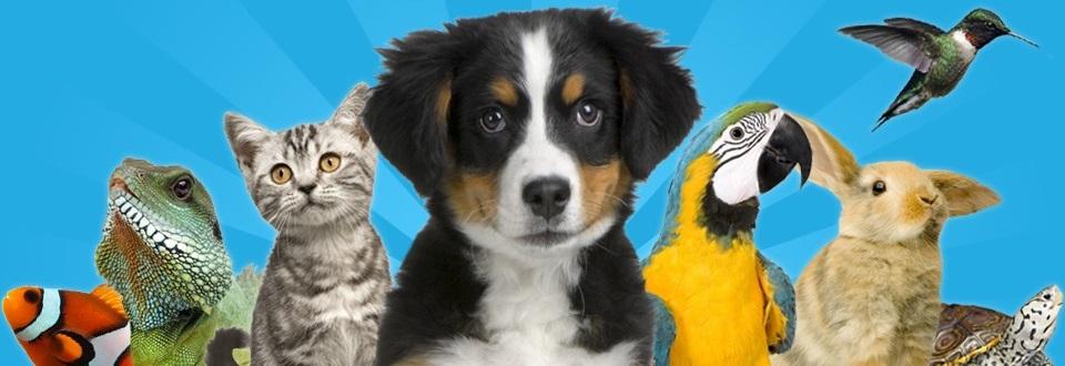 Pet Shop Pet Kasa Animale