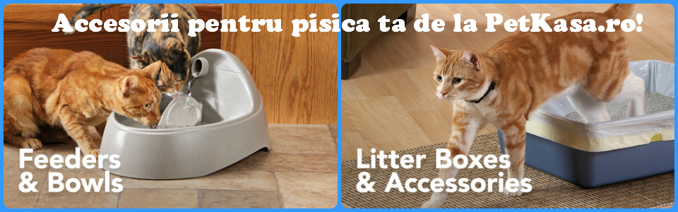 Pet Shop Pisici Accesorii