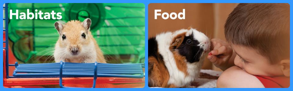 Pet Shop Rozatoare Hrana