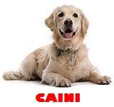 Pet shop caini