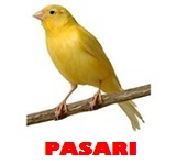 Pet shop pasari