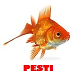 Pet shop pesti