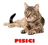 Pet shop pisici