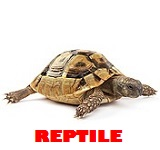Pet shop reptile