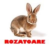 Pet shop rozatoare
